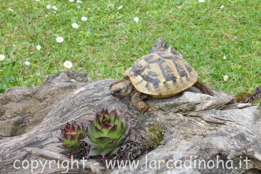 tartarughe di terra