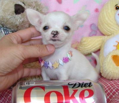 Cani cuccioli in regalo lecco