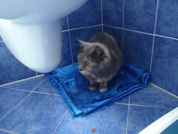 Aria micia dal manto blu in cerca di una nuova casa for In cerca di una nuova casa