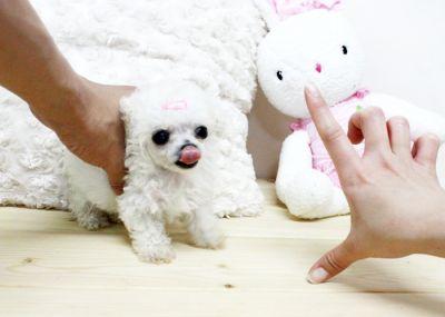 Cuccioli in regalo taglia piccola trento