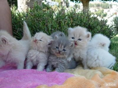 Regalo gattini toscana subito